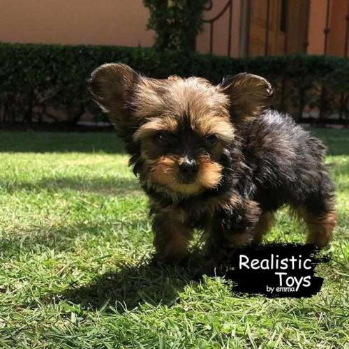 Emma Realistic Toys - Yorkie Dog Moki