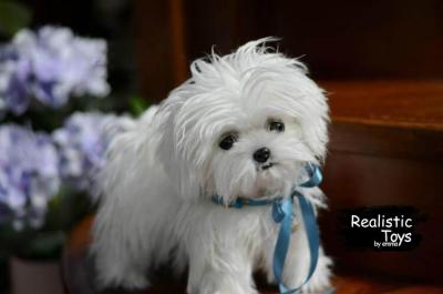 Emma Realistic Toys - Realistic & Lifelike Maltese Puppy Lucky