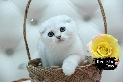 Emma Realistic Toys - Realistic & Lifelike Scottsish Fold Cat  Thalia