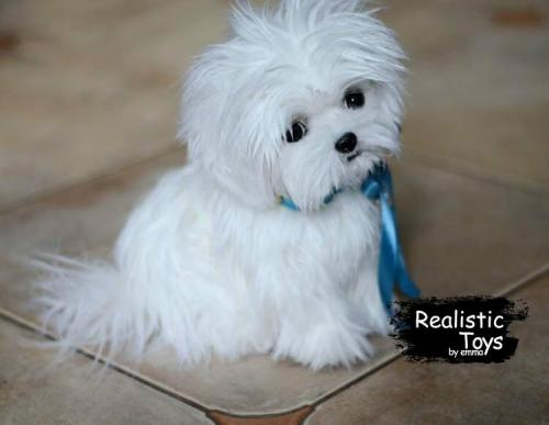 Emma Realistic Toys - Realistic & Lifelike Maltese Puppy Lucky