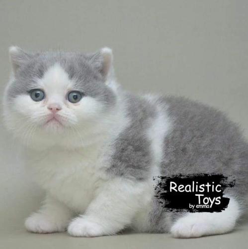 Emma Realistic Toys - Realistic & Lifelike Scottsish Fold Cat  Valery