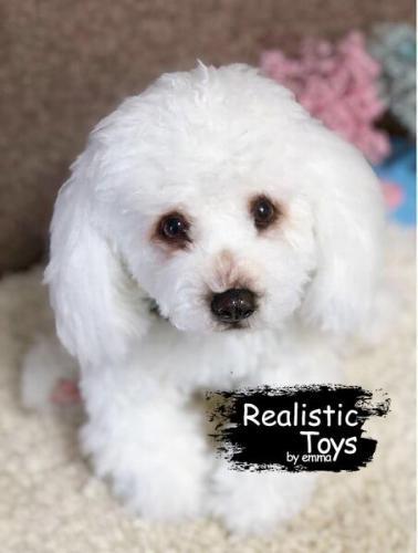 Emma Realistic Toys - Realistic & Lifelike Poodle Dog Mason