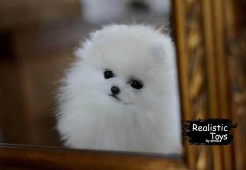 Emma Realistic Toys - Realistic & Lifelike Spitz Puppy Leon