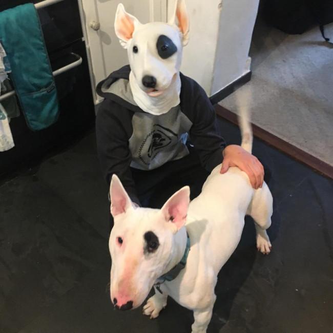 PartyCostume - Bull Terrier Mask - Halloween Costume Latex Animal Dog Mask