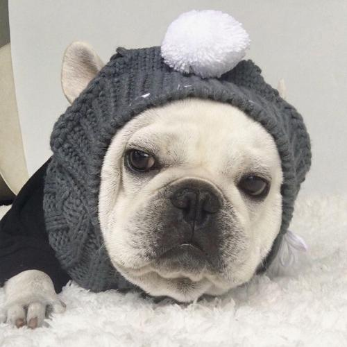Cozy Head Warmer Cable Knit Bull Dog Ear Slits Hat