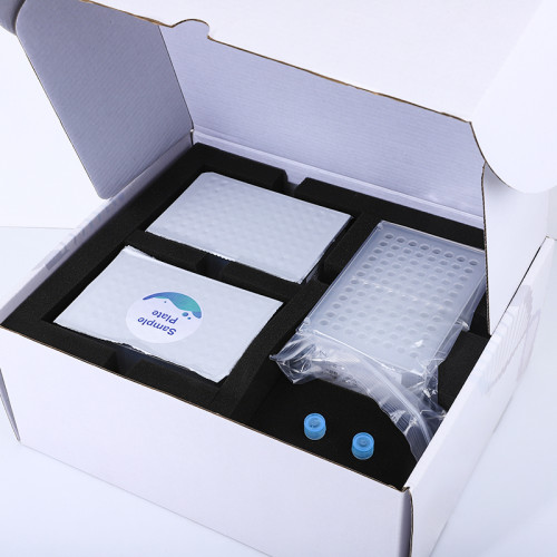 Supplier Magnetic Bead Method Sample PCR Plate Test Nucleic Acid Extraction Kit