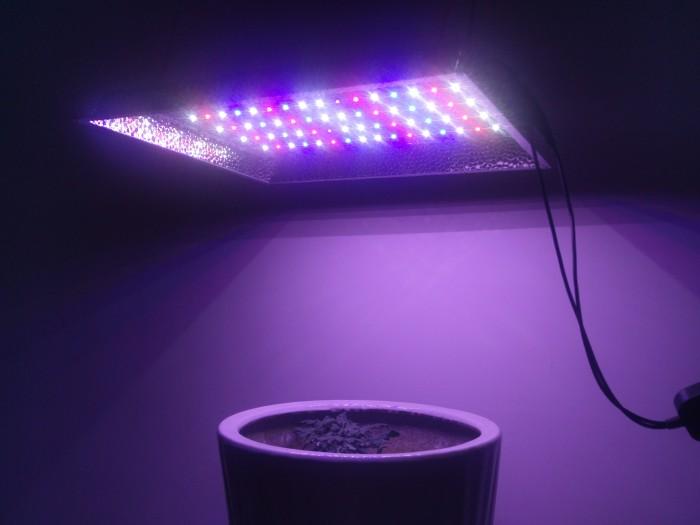 1200W VEG Bloom 9 levels dimmable smart 2-18H timer full spectrum UV led grow light IP65 finish quantum
