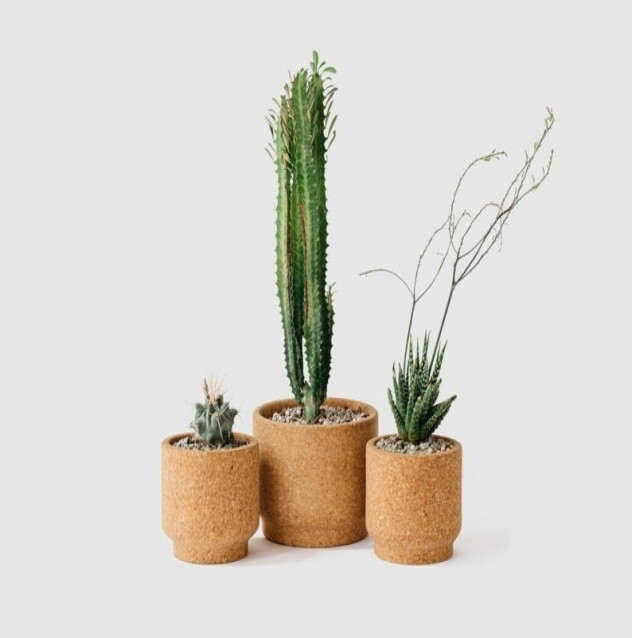 Modern cork planter