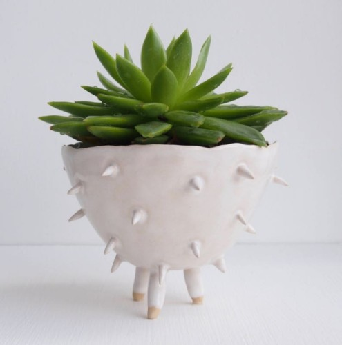 Ceramic cactus flower pot