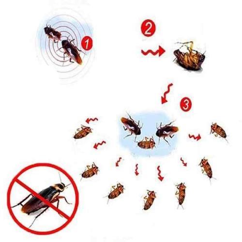 Cockroach Gel