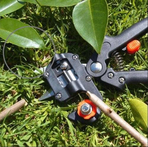 Garden Grafting Tool