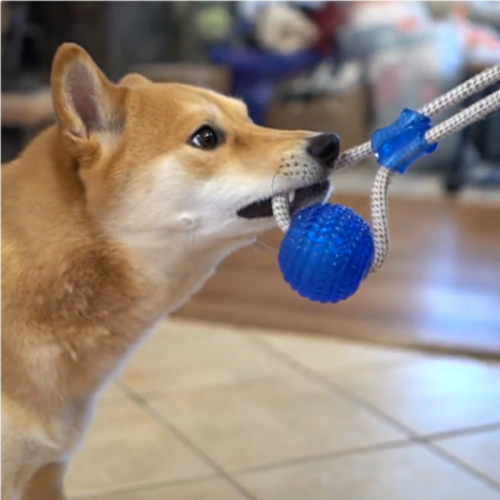 The Tug Toy