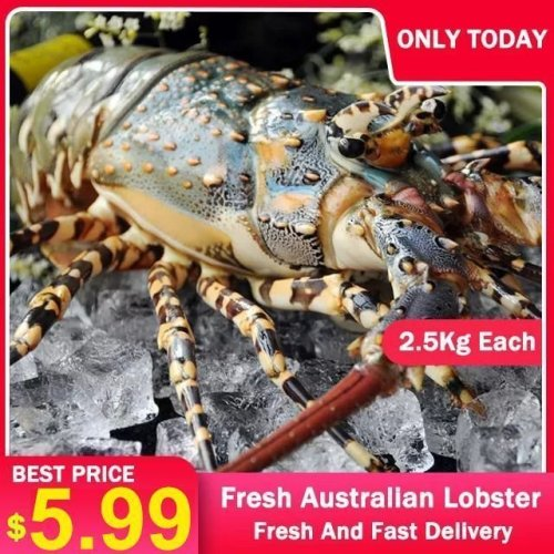 🔥HOT SALE🔥 2.5KG MANUALLY CAUGHT AUSTRALIAN LOBSTER – FRESH AND FAST DELIVERY – GUARANTEE FRESH TASTE